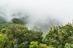 Nebel- und Wolkenbildung entlang dem TF-134 in Teneriffa stockbilder