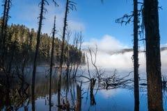 Nebel unter dem See im Wald Lizenzfreie Stockfotografie