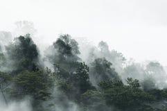 Nebel-Wald Lizenzfreie Stockbilder