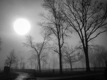 Nebel Wolfe-` s im Teich-Park Lizenzfreies Stockbild