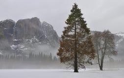 Nebel in Yosemite-Tal mit Kiefer und Eichen und in Yosemite Falls, Yosemite Nationalpark stockbild