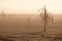 Nebelhafte Bäume Stockfoto
