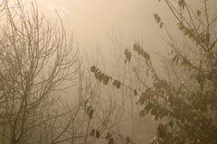 Nebelhafte Bäume Stockbild