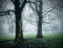 Nebelhafte Bäume lizenzfreies stockfoto