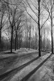 Nebelhafte Bäume Stockfotografie