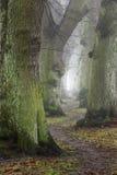 Nebelhafte Bäume im Herbst lizenzfreie stockfotografie