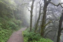 Nebelhafte Bahn durch Holz Stockfotos