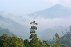 Nebelhafte D?mmerung des Morgens unter den Bergen von Sri Lanka lizenzfreies stockbild