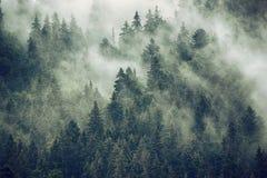 Nebelhafte Gebirgslandschaft lizenzfreies stockbild