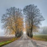 Nebelhafte Herbst-Allee Stockfotos
