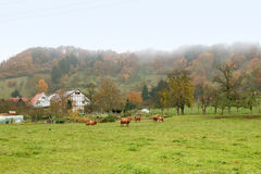 Nebelhafte Herbstlandschaft Stockbild