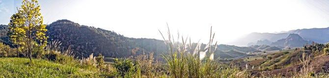 Nebelhafte Herbstlandschaft des Panoramas mit einzelnem gelbem Baum auf Hügel und Morgenhimmel mit Berg Lizenzfreie Stockbilder