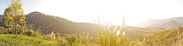 Nebelhafte Herbstlandschaft des Panoramas mit einzelnem gelbem Baum auf Hügel und Morgenhimmel mit Berg Stockfotos