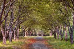 Nebelhafte Herbststraße im Wald Stockbilder