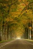 Nebelhafte Herbststraße Stockfotografie