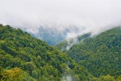 Nebelhafte Landschaft Stockbild