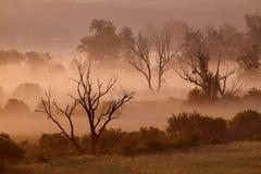 Nebelhafte Landschaft des Morgens Stockbilder