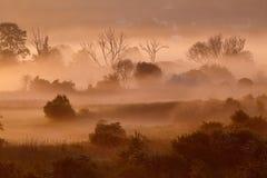 Nebelhafte Landschaft des Morgens Stockbild