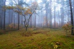 Nebelhafte Landschaft im Wald Stockfotografie
