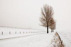 Nebelhafte Landschaft mit einer Reihe der Bäume Stockfoto