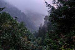 Nebelhafte Landschaft mit Tannenwald lizenzfreie stockbilder