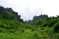 Nebelhafte Landschaft mit Tannenwaldmorgennebel in den Bergen lizenzfreie stockfotos