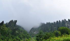 Nebelhafte Landschaft mit Tannenwaldmorgennebel in den Bergen lizenzfreies stockbild