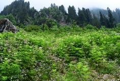 Nebelhafte Landschaft mit Tannenwaldmorgennebel in den Bergen lizenzfreie stockbilder