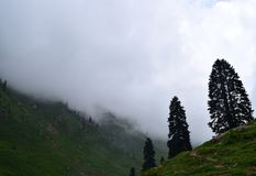 Nebelhafte Landschaft mit Tannenwaldmorgennebel in den Bergen stockfotografie