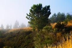 Nebelhafte Landschaft von Galizien Stockfoto
