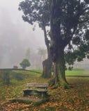 Nebelhafte Morgenherbstlandschaft Waldwald im Nebel Stockfotos