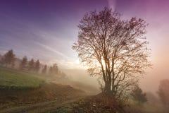 Nebelhafte Morgenszene mit einsamem Baum lizenzfreies stockbild