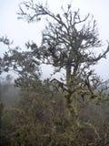 Nebelhafte nasse Wald-Bosque-abgenutzte Stelle Jorge im Paprika Stockfotografie