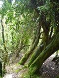 Nebelhafte nasse Wald-Bosque-abgenutzte Stelle Jorge im Paprika Lizenzfreie Stockfotos