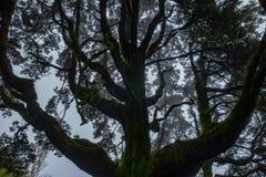 Nebelhafte Niederlassungen von Bäumen im Wald lizenzfreies stockbild