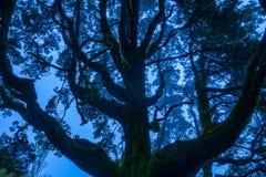 Nebelhafte Niederlassungen von Bäumen im Wald lizenzfreie stockfotos