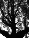 Nebelhafte Niederlassungen von Bäumen im Wald lizenzfreie stockbilder