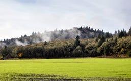 Nebelhafte Oregon-Hügel über grünem Feld Stockbilder