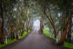 Nebelhafte Straße Lizenzfreies Stockfoto