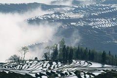 Nebelhafte Terrasse stockbilder