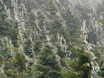 Nebelhafte Waldlandschaft. Stockbild