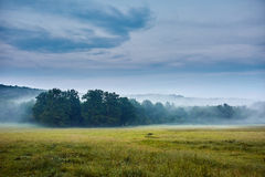 Nebelhafte Waldlandschaft Stockbild
