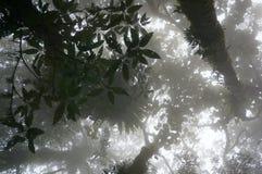 Nebelhafte Waldszene Lizenzfreies Stockbild