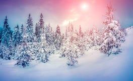 Nebelhafte Winterszene im schneebedeckten Gebirgswald Stockfoto