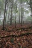 Nebelhafter Anfang des Herbstes im Wald Lizenzfreie Stockbilder