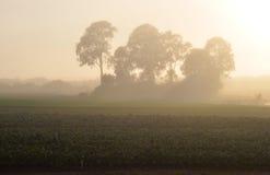 Nebelhafter Bauernhofsonnenaufgang Lizenzfreies Stockbild