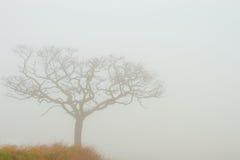 Nebelhafter Baum Lizenzfreie Stockfotos