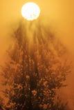 Nebelhafter Baum bei Sonnenaufgang stockbild