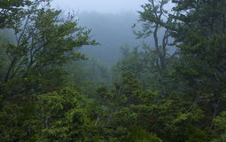 Nebelhafter Dschungel Lizenzfreies Stockfoto