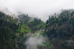 Nebelhafter dunkler Wald Lizenzfreies Stockbild
